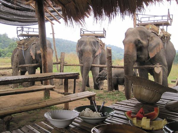 elephant-training-1