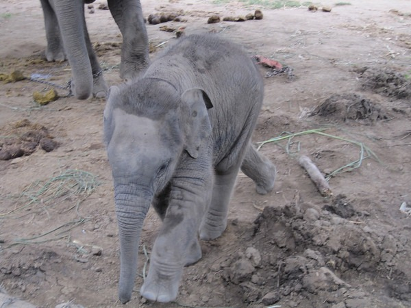 elephant-training-2