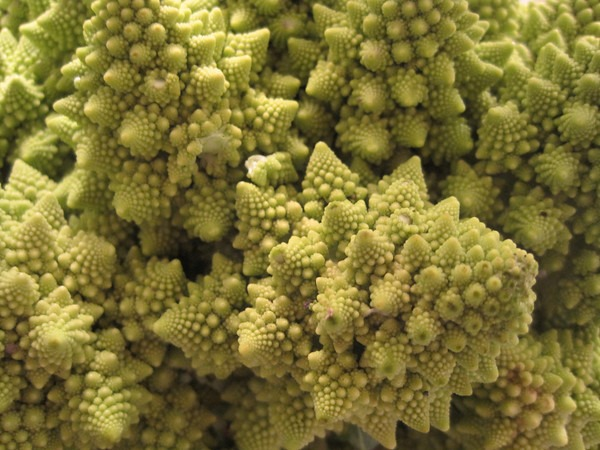 romanesco-broccoli-2