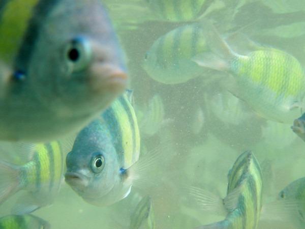 thailand-fish