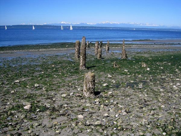 low-tide-4
