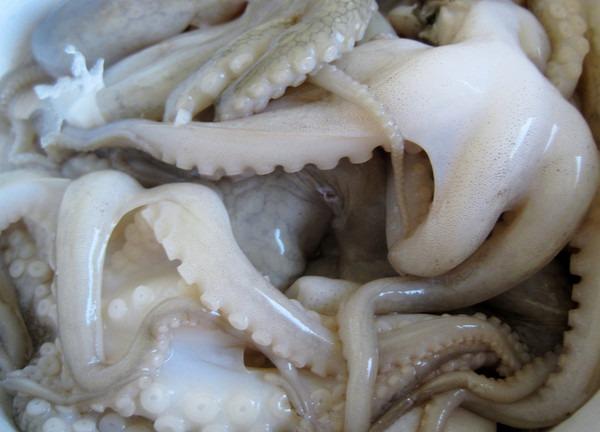 wild-octopus-2