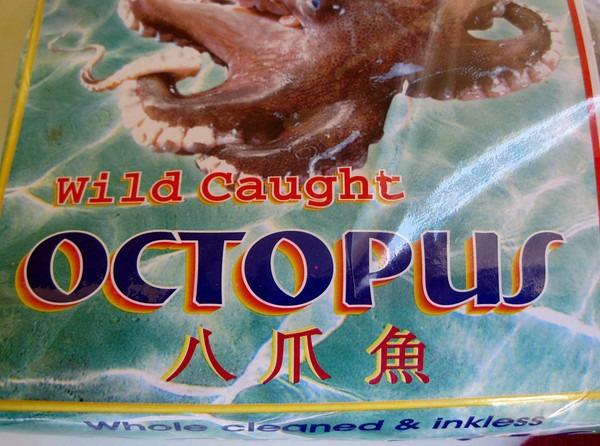 wild-octopus