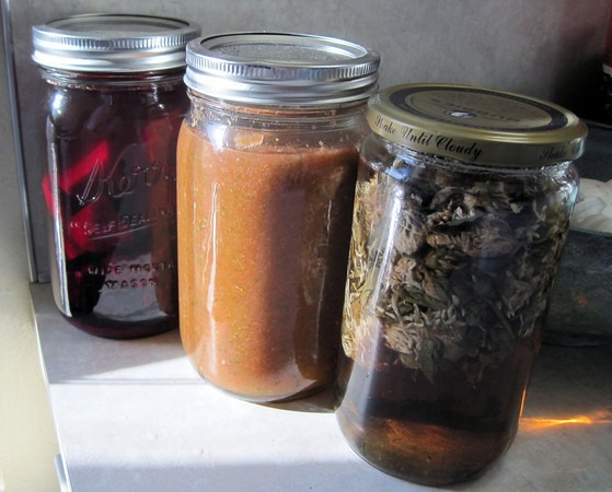 kvass-salsa-red-clover