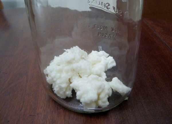kefir-grains