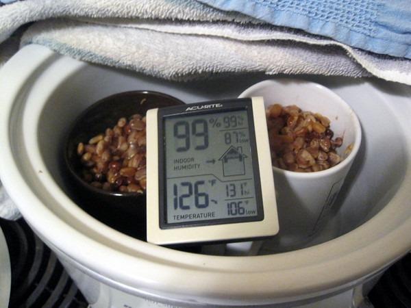 natto-ferment